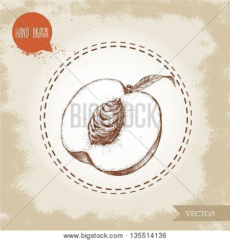 Hand drawn sketch style half of peach fruit. Vintage eco food vector illustration. Grunge background.