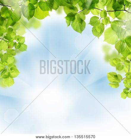 Summer leaves on floral greenery background and sky