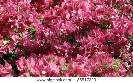Red Background Of Beautiful Flowers In Bloom