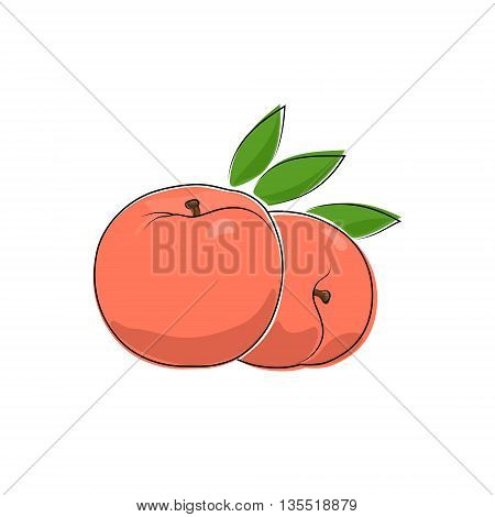 Peach Isolated on White Background, Fruit Peach, Vector Illustration