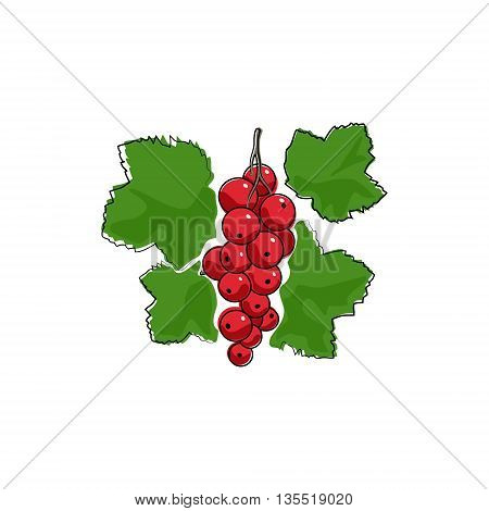 Berry Redcurrant Isolated on White Background ,Fruit Redcurrant, Vector Illustration