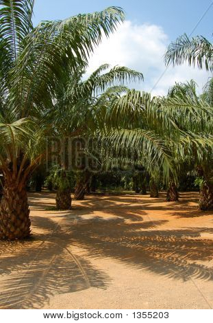 Thailand Palm Oil Plant