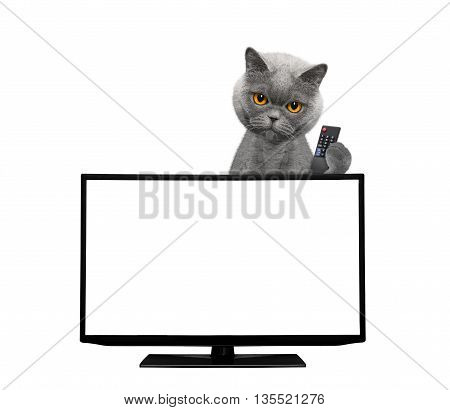 Cat watching television -- isolated on white