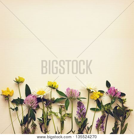 Closeup of wild flowers edge on light background
