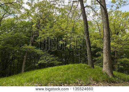 A Native American burial mound in the woods.