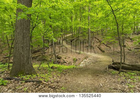 A hiking trail in the woods during spring.