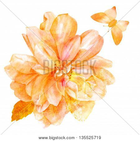 A beautiful watercolor rose hand painted in vintage botanical art style on white background with a leaf and a butterfly toned with a golden texture