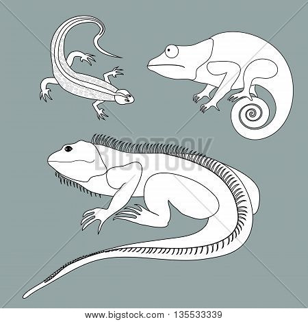 Illustration of lizard, chameleon, iguana in black and white colors on a colored background