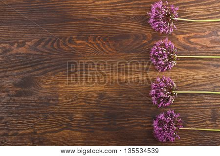 Five violet flowers on the wooden background