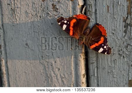 Vanessa Atalanta butterfly close up view on fence