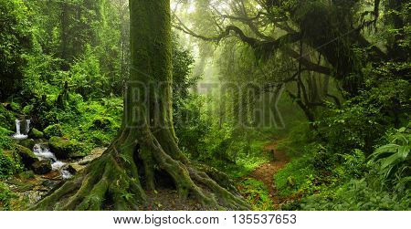 Deep and dense tropical jungle in Nepal