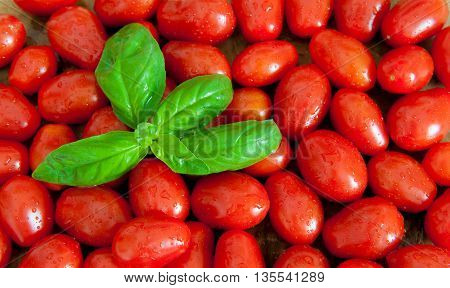 Cherry tomatoes background with fresh green basil leaves view from the top