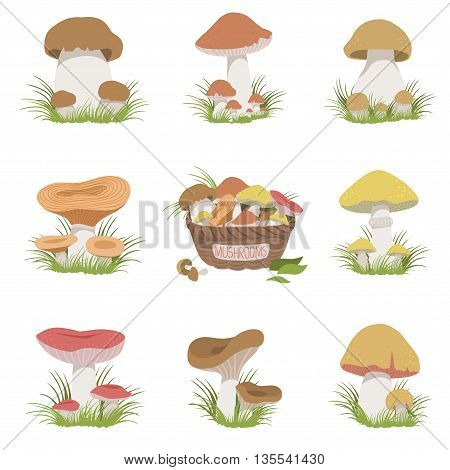 Eatable Mushrooms Realistic Set Of Flat Pale Color Detailed Drawings Isolated In White Background