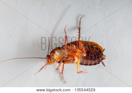 close up The dirty cockroach on the floor