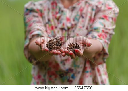 Few Pine Cones In Woman Hands, Closeup