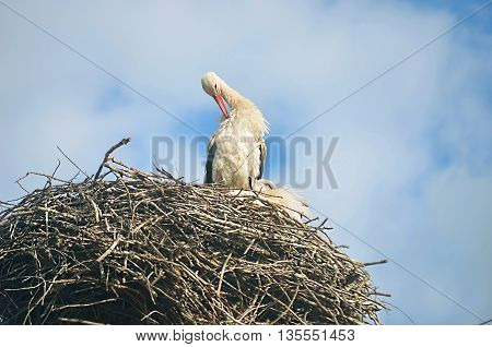 Stork in its nest high up in the branches