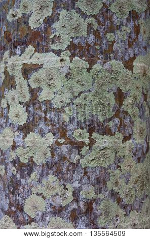 Lichen on the tree, For background and texture.