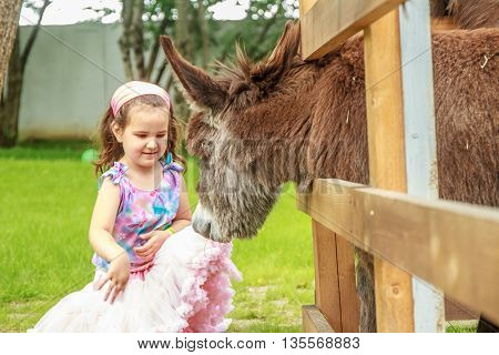 outdoor portrait of young happy young girl feeding donkey on farm