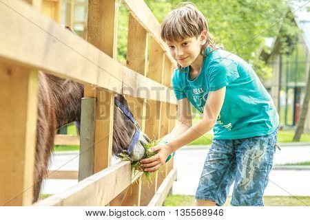 outdoor portrait of young happy young boy feeding donkey on farm