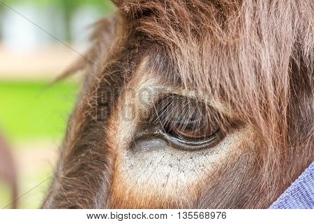 close up of donkey's eye