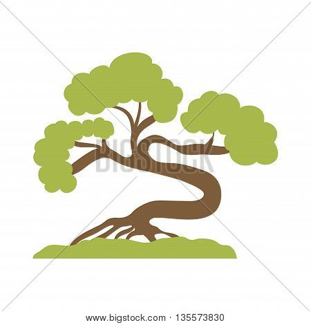 Japan culture concept represented by bonsai plant icon over flat and isolated background