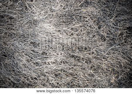burnt last years grass texture at spring