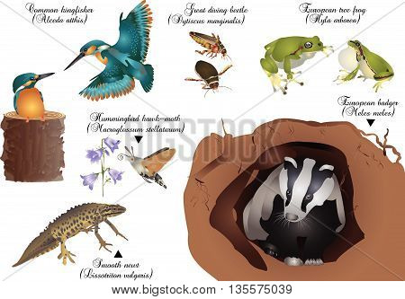 It is illustration of animals living in Europe.