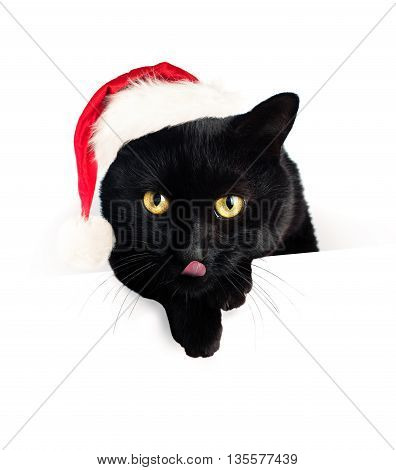 Christmas Cat and White Blank Paper Banner Background. Black Cat in Santa Hat
