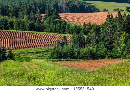 A patchwork of farm fields with hills and rows and freshly planted  potatoes in rural Prince Edward Island, Canada.