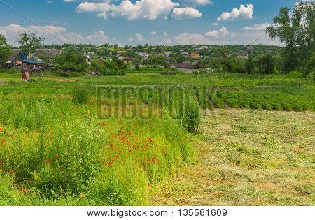 June landscape in Sursko-Litovskoe village central Ukraine
