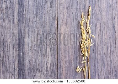 Ears of oat on dark wooden table background.Top view with copy space