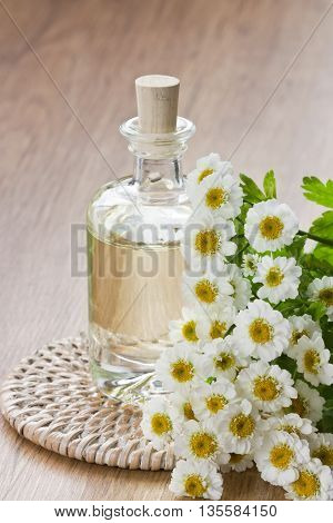 Essential aroma oil with chamomile flower for aromatherapy spa massage on wooden background