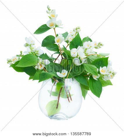 Jasmine flowers and leaves twigs in vase isolated on white background