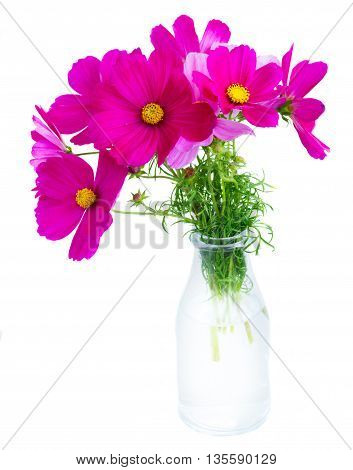 Cosmos pink flowers in glass vase isolated on white background
