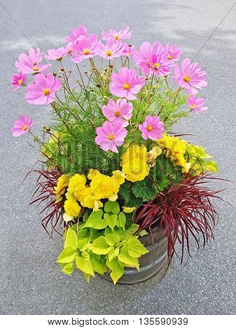 Beautiful floral arrangement with yellow begonias and pink cosmos flowers.
