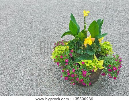 Floral arrangement with colorful plants and blooming flowers. Outdoor decoration.