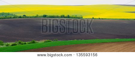 Panorama. Agricultural land with colza and young wheat and young sunflower.