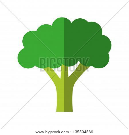 Organic and healthy food represented by broccoli over isolated and flat background