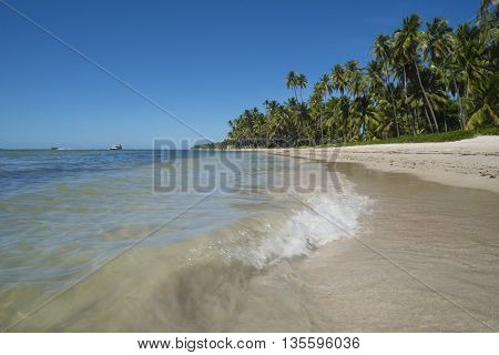 Tropical Beach Coast Landscape With Palm Trees