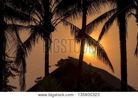 Beach House Roof With Palm Trees On Summer Sunset