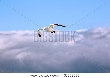 The bird is flying in the blue sky