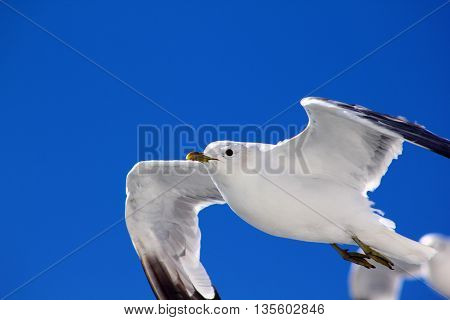 The birds are flying in the blue sky