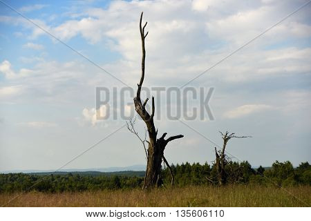 Old tree in mountains on meadow in summer day