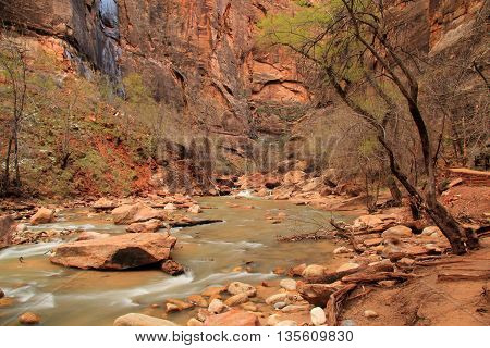 View of the Virgin River from Riverside Walk, Zion National Park, Utah