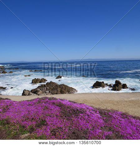 This is an image of the coastal rocks and plants of Pacific Grove, California, U.S.A.