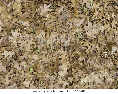 A forest floor covered wit fallen leaves.