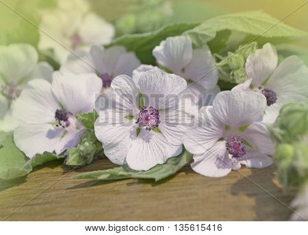 Flowers and leafs on a wooden table. Marsh Mallow
