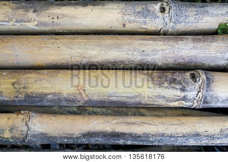 background old bamboo outdated wall wood nature