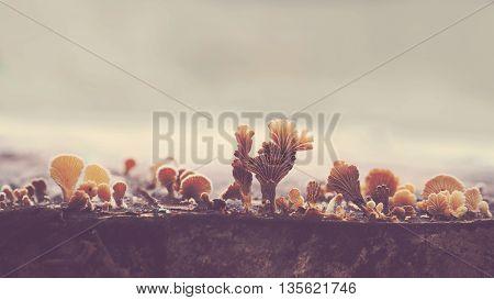 Small mushrooms fan shape on wooden ground in rainy season. Vintage filter effect