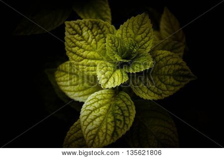 The beauty of the leaves when exposed to light.
